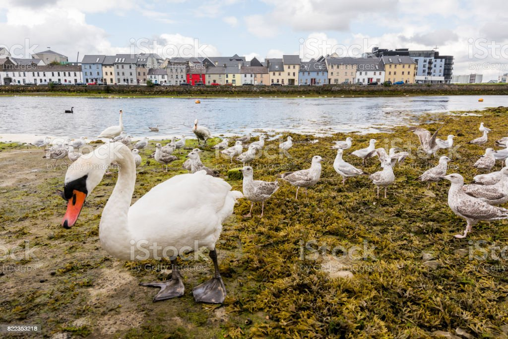 Landascapes of Ireland. Galway city and Corrib river stock photo
