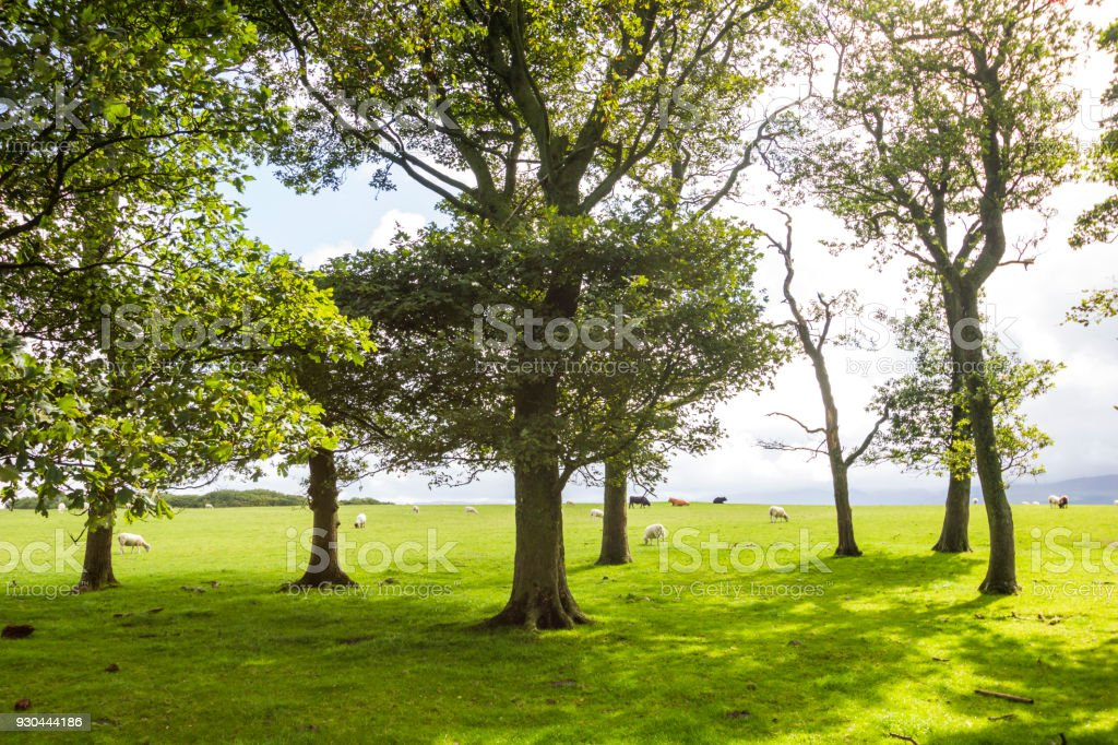 Landcapes and Nature in Anglesea, Wales, UK stock photo