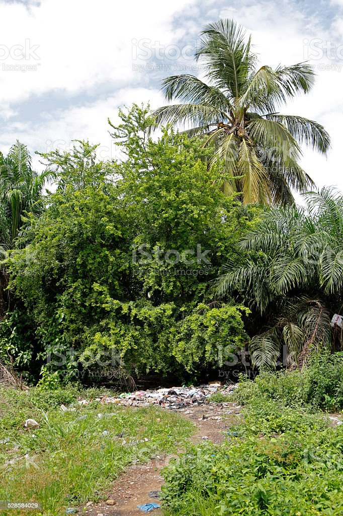 Landfill between trees and palms stock photo
