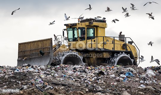 A heavy compactor/bulldozer reshape rubbish on a landfill site and gets mobbed by hungry birds