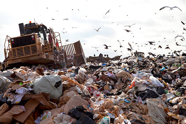 Landfill truck in trash Truck working in landfill with birds looking for food. compactor stock pictures, royalty-free photos & images