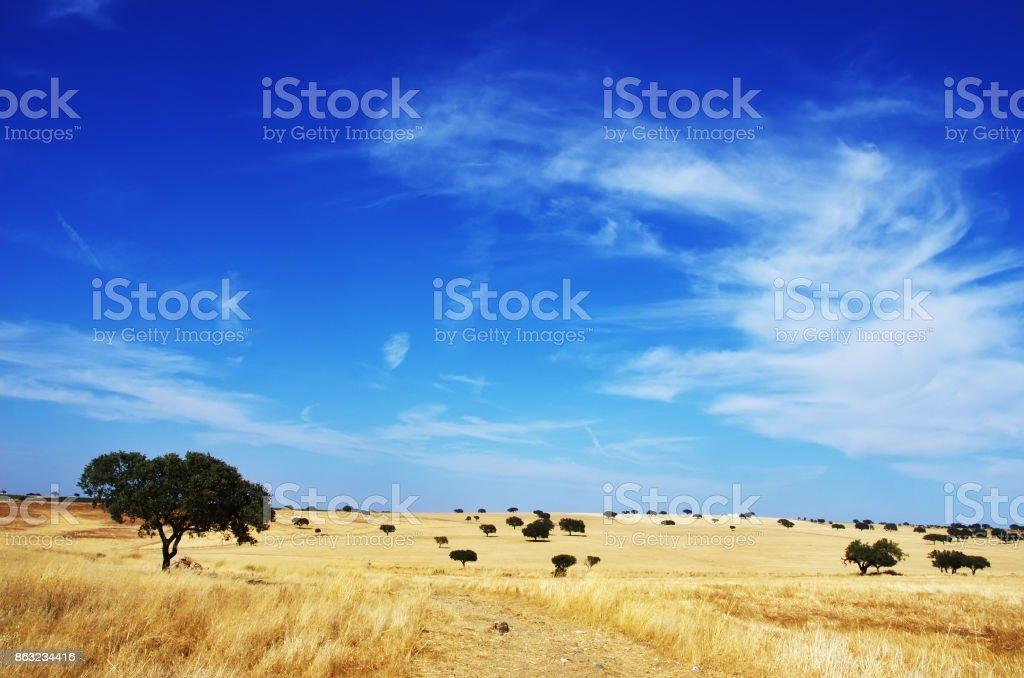 Landschaft. Alentejo-Region südlich von Portugal – Foto