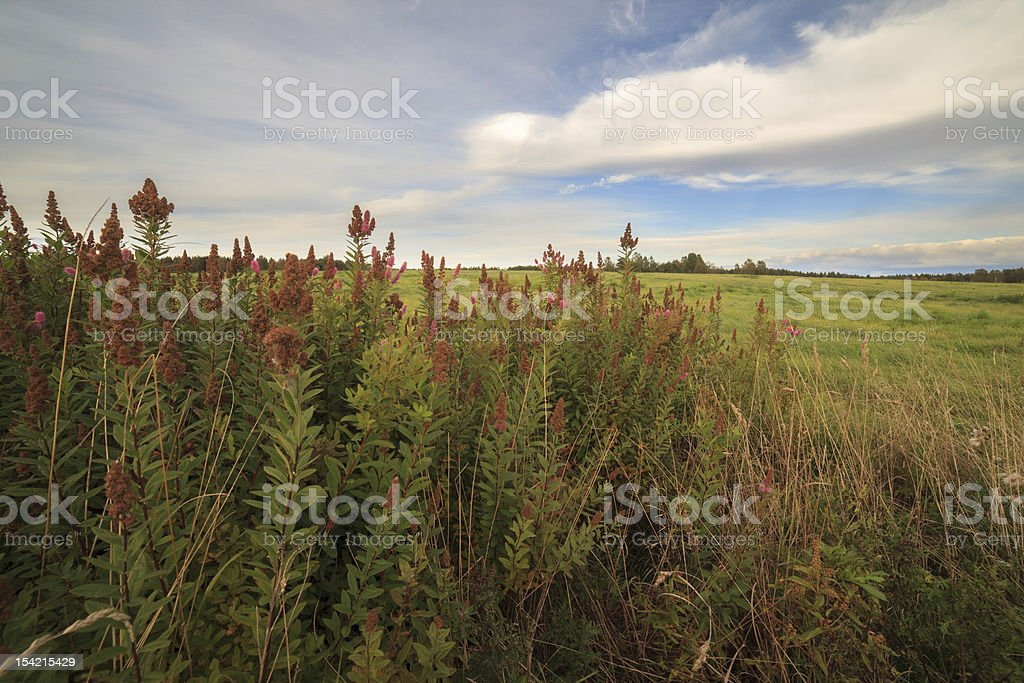 landscape. An autumn grass in the field royalty-free stock photo