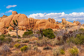 View of landscape and Joshua tree, in Joshua Tree National Park, California, USA