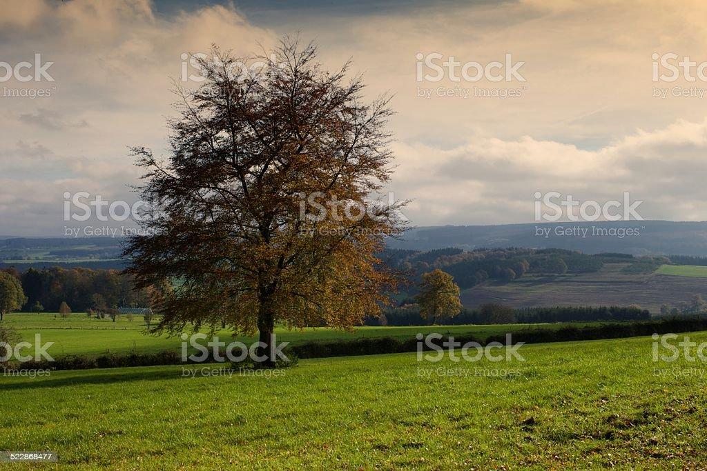 Paysage ardennen automne - Photo
