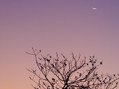 'Landscape at dusk with silhouette of twigs of a tree, moon and colorful sky.'