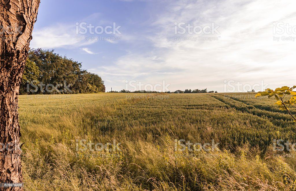 Landscape at evening foto royalty-free