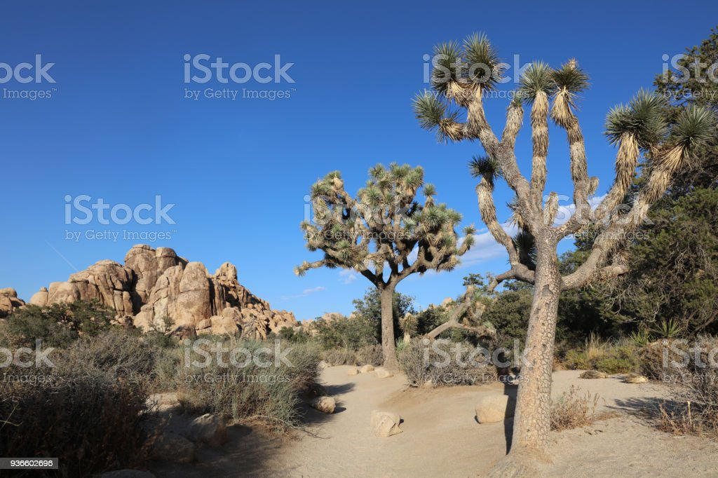 Landscape at Hidden Valley Trail in Joshua Tree National Park. California. USA stock photo