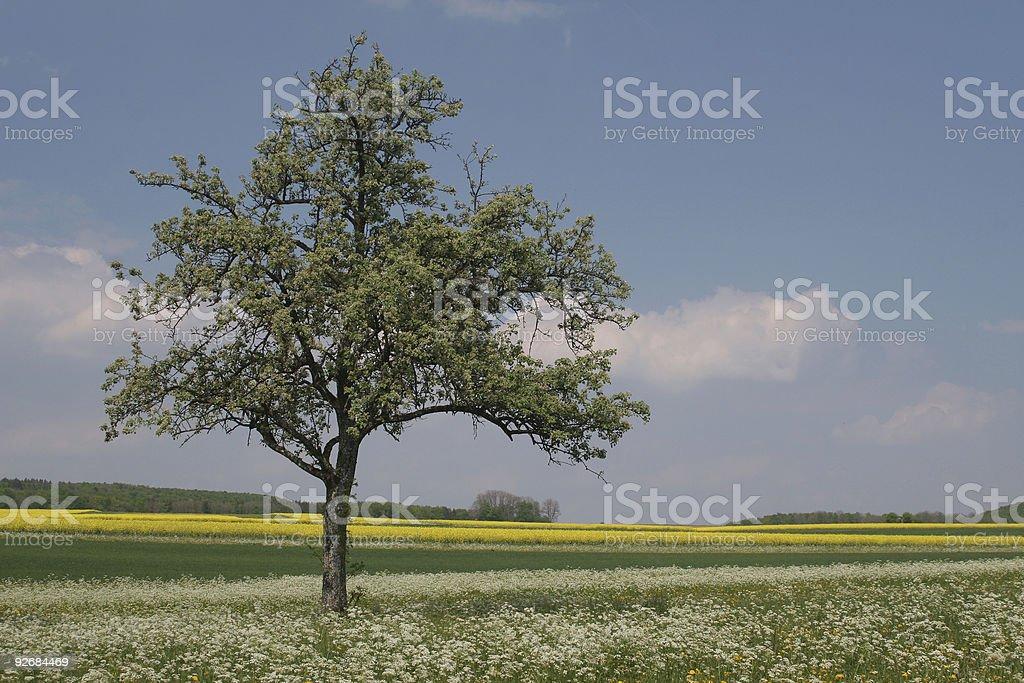 landscape at springtime royalty-free stock photo
