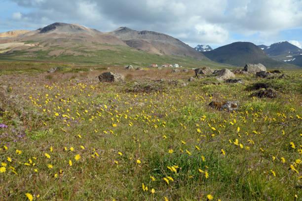 Landschaft am Stykkisholmur, Island – Foto