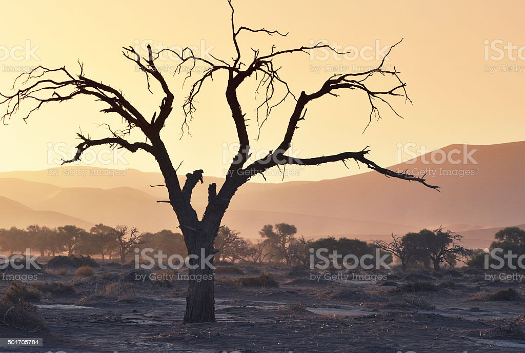 Landscape at sunset in Sossusvlei,Namibia stock photo