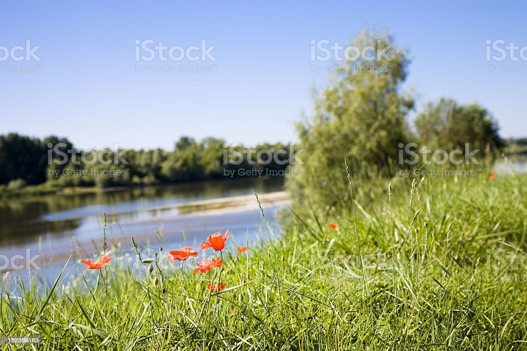 Landscape at the Loire River with Poppies royalty-free stock photo