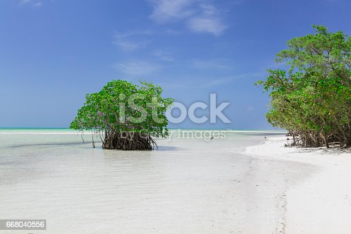 Amazing, gorgeous natural landscape background view of turquoise, tranquil ocean with green trees merging with clear beautiful sky at horizon line on sunny warm day at Cayo Coco island beach, Cuba