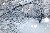 landscape bare branches in winter