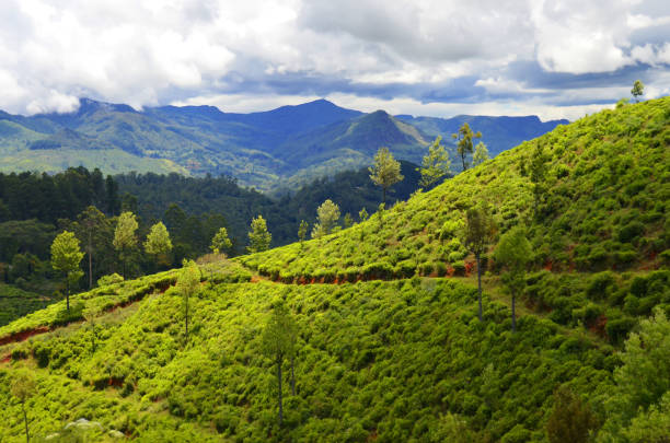 Landscape between Kandy and Ella stock photo