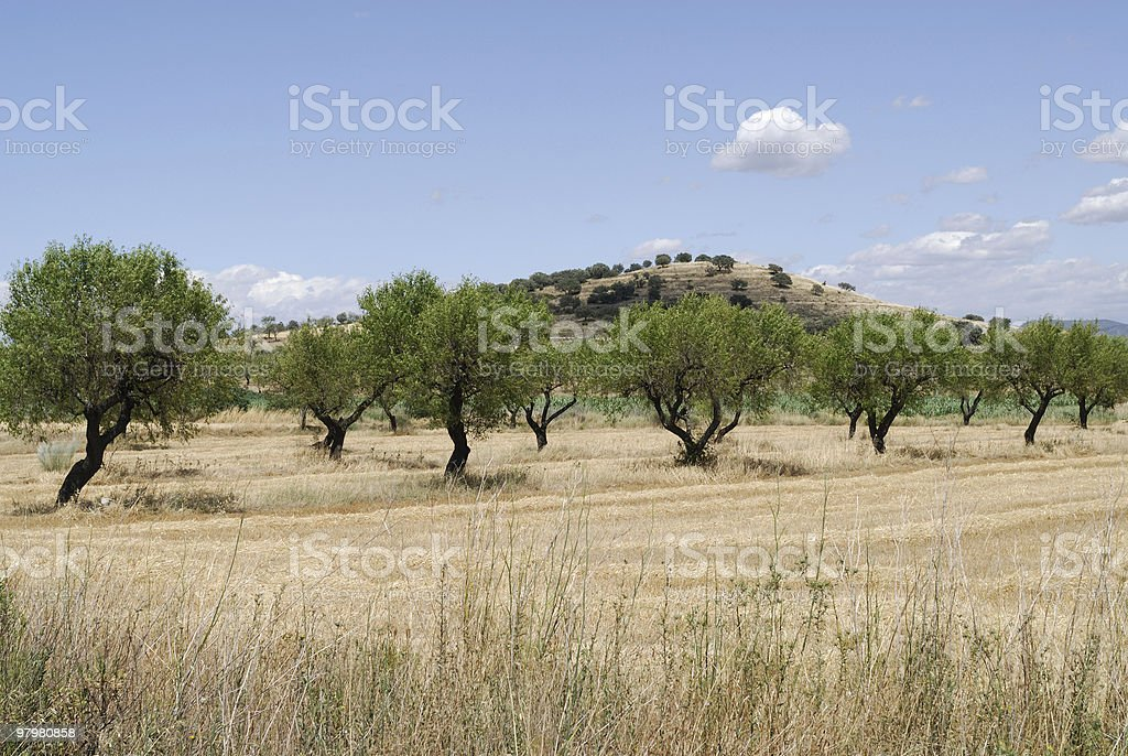 Landscape between Monzon and Balaguer (Aragon - Catalonia) at summer royalty-free stock photo