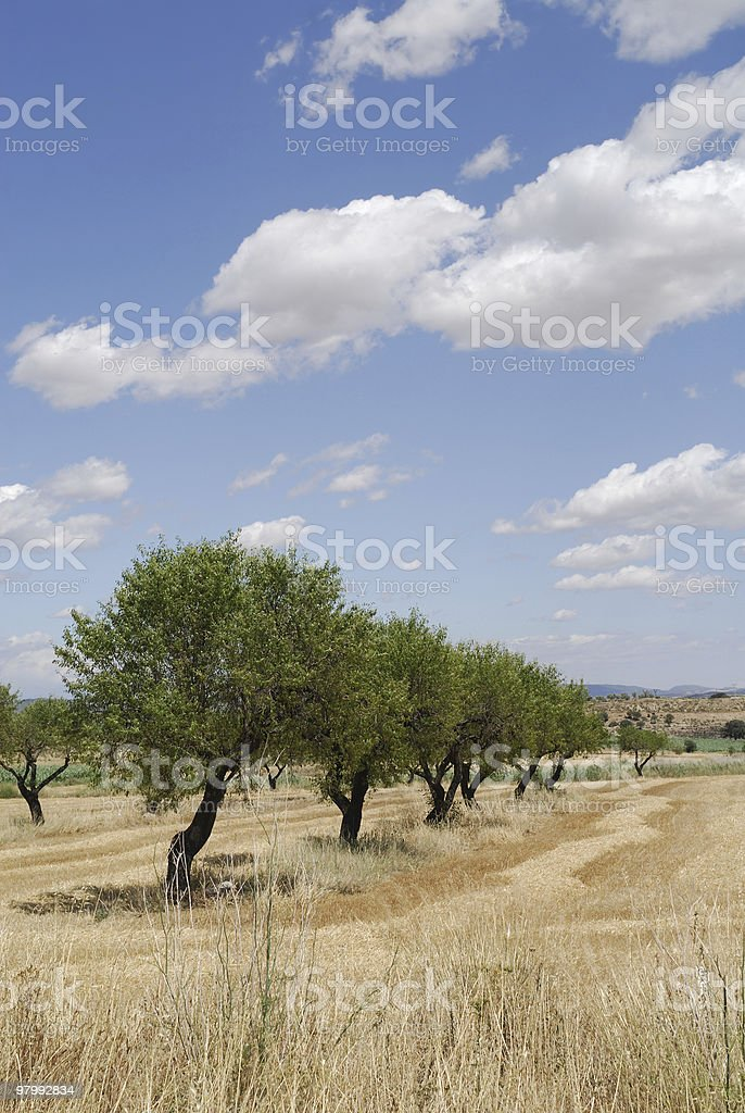 Landscape between Monzon and Balaguer (Aragon - Catalonia) at summer royalty free stockfoto