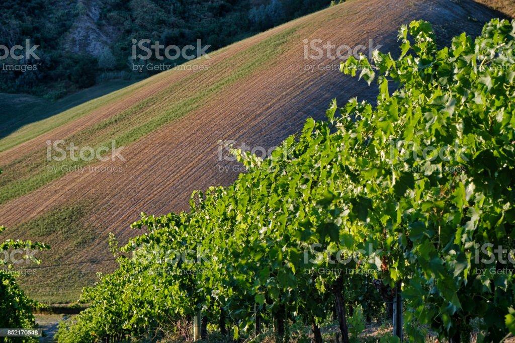 Landscape between Riolo Terme and Brisighella (Emilia Romagna) - foto stock