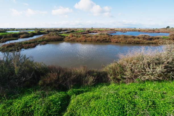 Landschaft vom Fluss Tejo – Foto