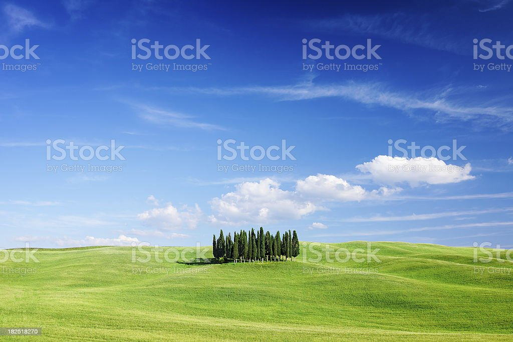Landscape - Cypresses among green fields. royalty-free stock photo