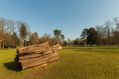 istock Landscape depicting a large trunk felled on the lawn of a park 1225457393