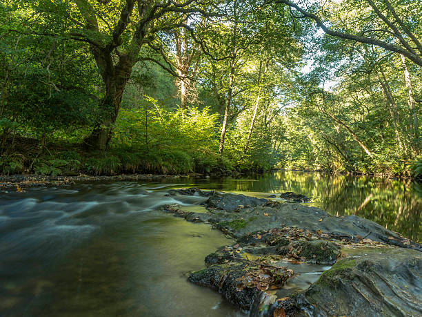 Landscape Depicting the River Teign on Dartmoor National Park – Foto