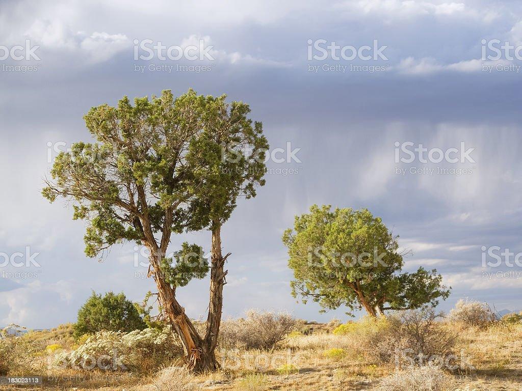 landscape desert storm cloud juniper trees royalty-free stock photo
