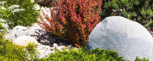 Projeto da paisagem-elementos do jardim ornamental, pedras e plantas coníferas, retrato panorâmico para o fundo - foto de acervo