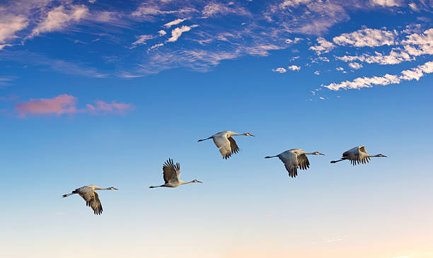 Landscape during sunset with flying birds panoramic view stock photo