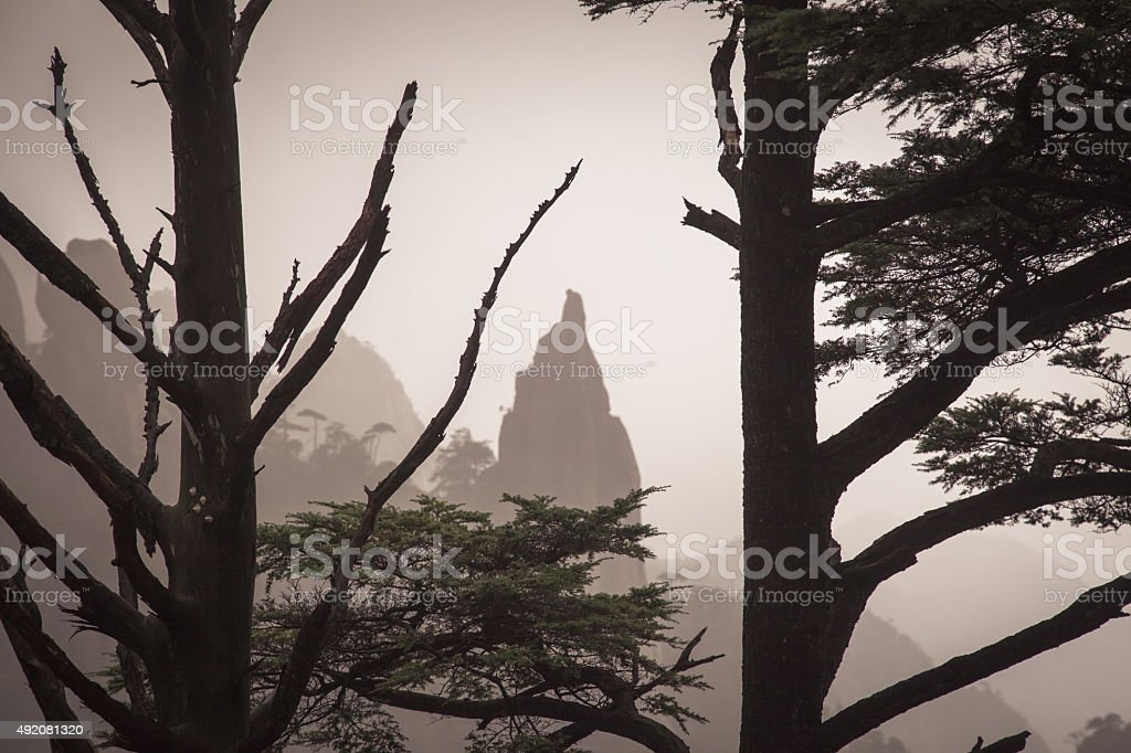 landscape fogs mountains hilltop tree frame stock photo