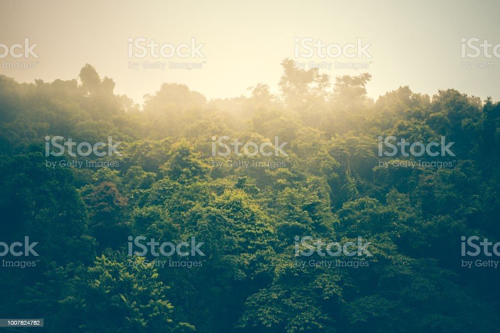 landscape forest in atmosphere cold weather the winter mist covered...