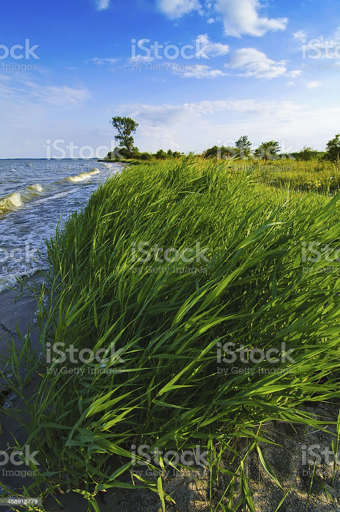 Landscape from Usedom island stock photo