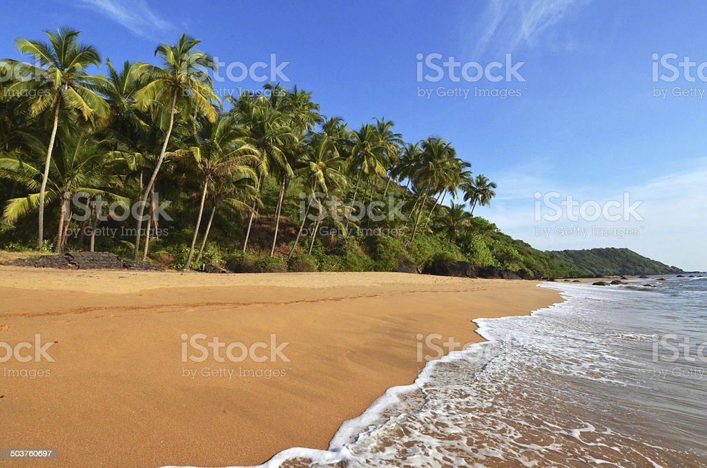 Photo beautiful landscape of palm trees and clouds at Goa in...