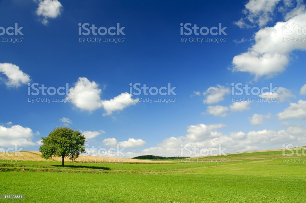 Landscape - Green field and lonely tree royalty-free stock photo