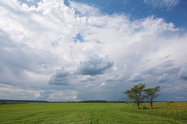 Landscape - green grass field, blue sky, clouds, two trees stock photo