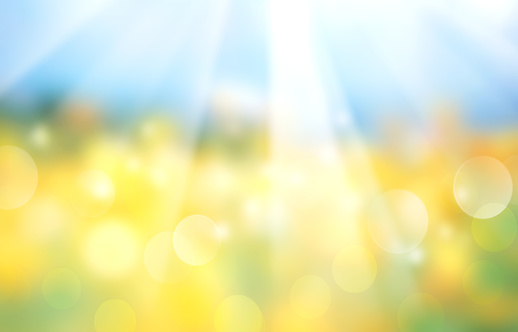 Landscape blue yellow nature blurred background.Panorama field sunshine view.Ukranian flag abstract wallpaper.Summer design blossom meadow backdrop.