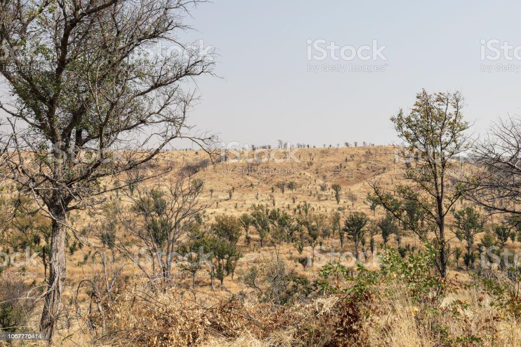 Landscape Hwange National Park near Nantwich Camp Zimbabwe stock photo