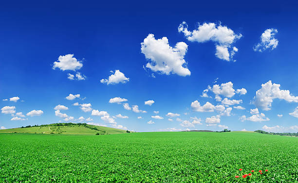 Landscape - Idyll, green field blue sky and white sky stock photo