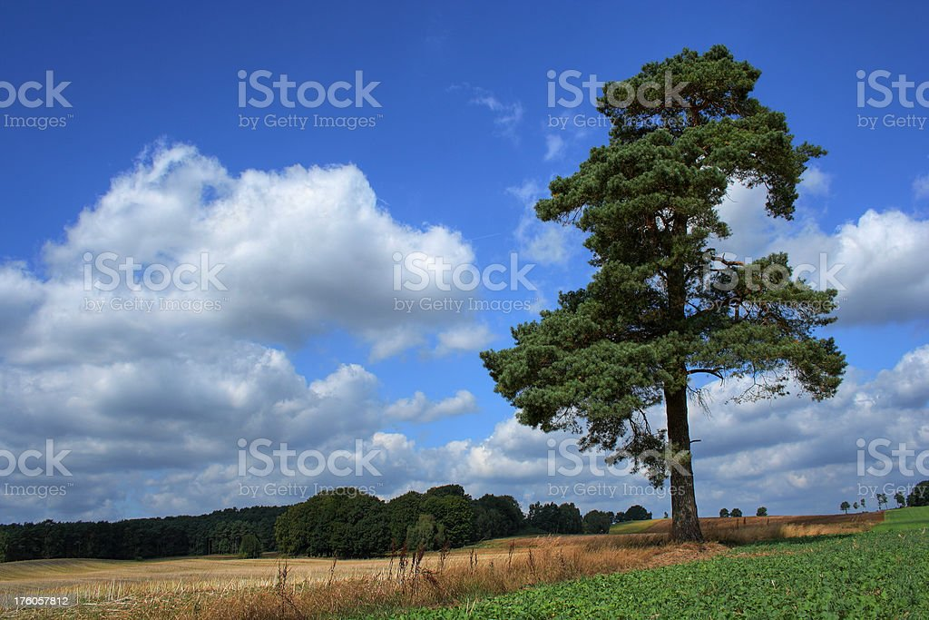 Landscape idyll royalty-free stock photo
