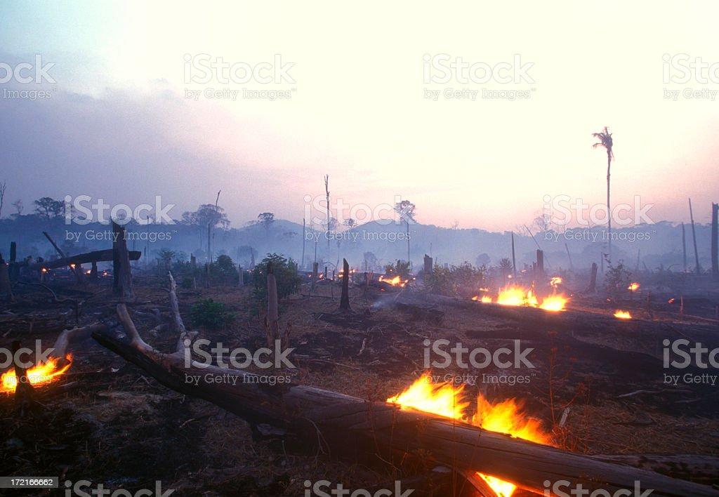 Landscape image of a burning forest at dusk royalty-free stock photo