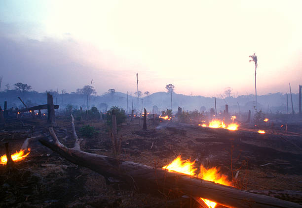 Landscape image of a burning forest at dusk 60-70 percent of deforestation in the Amazon results from cattle ranches and soyabeans cultivation while the rest mostly results from small-scale subsistence agriculture. amazon region stock pictures, royalty-free photos & images