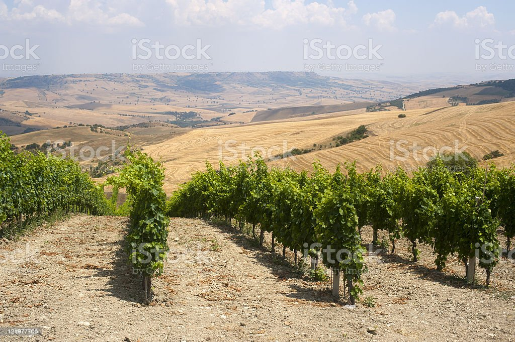 Landscape in Basilicata (Italy) near Forenza at summer: vineyard royalty-free stock photo