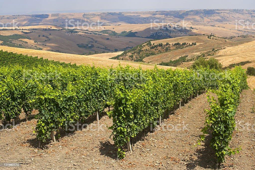 Paesaggio in Basilicata (Italia) vicino Forenza in estate: Azienda vinivola - foto stock