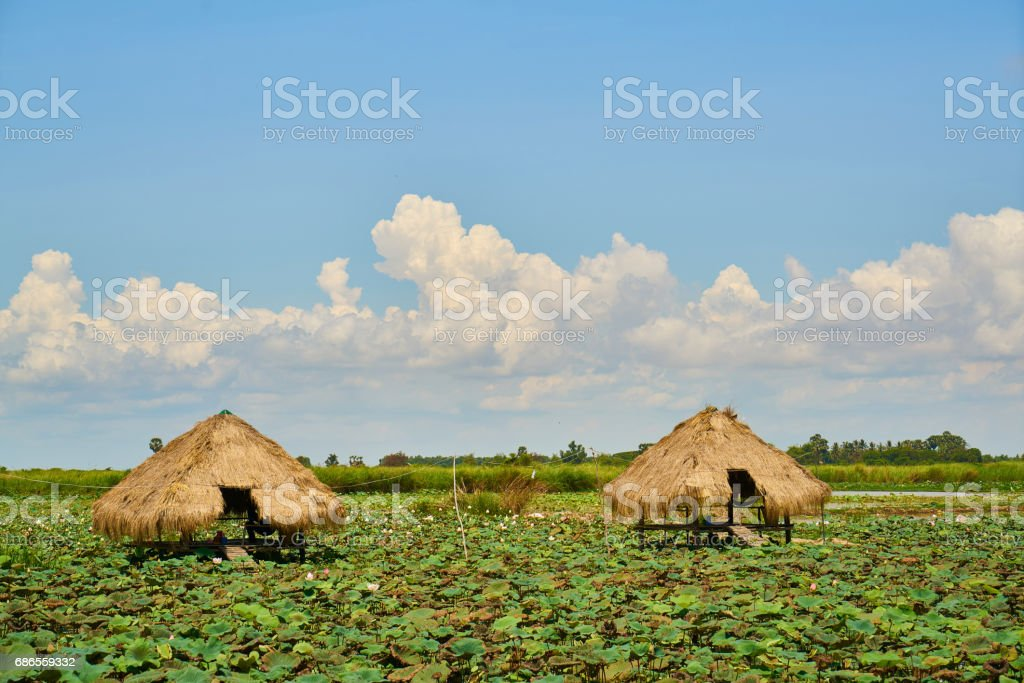 Landscape in Cambodia royalty-free stock photo