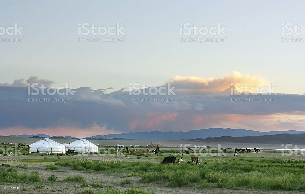 A landscape in Mongolia with cattle royalty-free stock photo