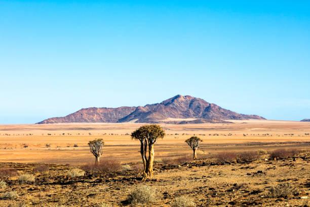 landschaft in der sandwüste in namibia - namib wüste stock-fotos und bilder