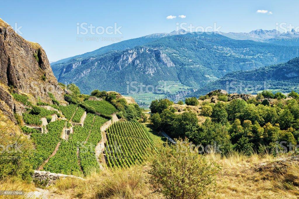 Paysage à Sion avec vignobles Alpes bernoises montagnes Valais Suisse - Photo