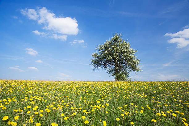 landscape in spring stock photo