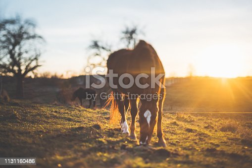 Landscape in sunset with horse at the meadow