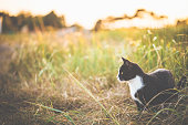 Landscape in sunset with little holiday home and cat